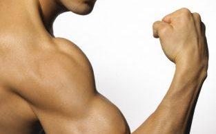 biceps_brazo