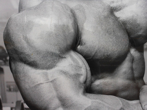 6684205707_e0cce58b25_big-biceps1